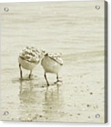 Two Of A Kind Acrylic Print