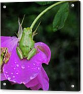 Two On The Upside-down Acrylic Print by Marvin Mast