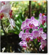 Two Orchid Branches Number One Acrylic Print