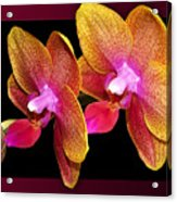 Two Orchids And A Bud Acrylic Print