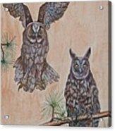 Two Owls Acrylic Print