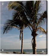 Two Palms And The Gulf Of Mexico Acrylic Print