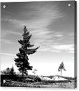 Two Pines Acrylic Print
