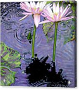 Two Pink Lilies In The Rain Acrylic Print