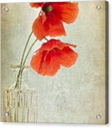 Two Poppies In A Glass Vase Acrylic Print