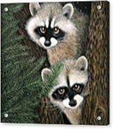 Two Raccoons Acrylic Print