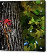 Two Red Leaves Acrylic Print