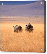 Two Rhino's Acrylic Print