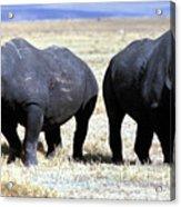 Two Rhinos Acrylic Print