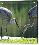Two Sandhills By The Water Acrylic Print