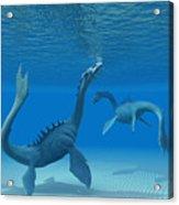 Two Sea Dragons Acrylic Print
