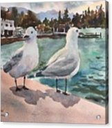 Two Seagulls By The Sea Acrylic Print