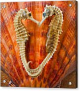 Two Seahorses On Seashell Acrylic Print