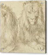 Two Seated Lions Acrylic Print