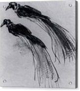 Two Studies Of A Bird Of Paradise 1630 Acrylic Print