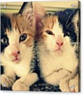 Two Tabby Cat Kittens Acrylic Print