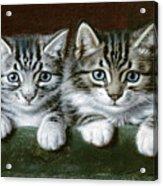 Two Tabby Kittens  Acrylic Print