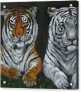 Two Tigers Oil Painting Acrylic Print