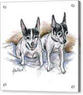 Two Toy Fox Terriers Acrylic Print