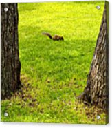 Two Trees And A Squirrel Acrylic Print