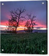 Two Trees In A Purple Sunset Acrylic Print