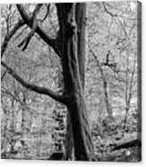 Two Trees In Spring - Mono Acrylic Print