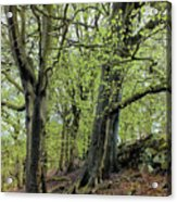 Two Trees In Springtime Acrylic Print