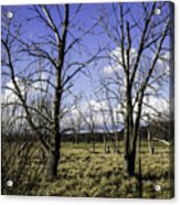 Two Trees Of Blue Acrylic Print