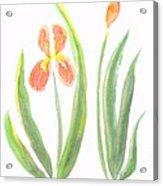 Two Iris II Watercolor Acrylic Print