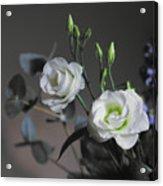 Two White Roses Acrylic Print