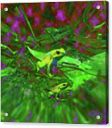 Two Yellow Frogs Acrylic Print