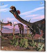 Tyrannosaurus Rex Attacking Acrylic Print