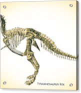 Tyrannosaurus Rex Skeleton Acrylic Print