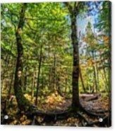 U Shaped Trees Cascade Mountain Ny New York Acrylic Print