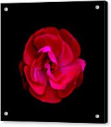 Ultimate Flower Acrylic Print