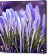 Ultra Violet Sound Acrylic Print