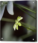 Umbrella Plant Acrylic Print