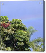Umbrella Tree With Rainbow And Flower Acrylic Print