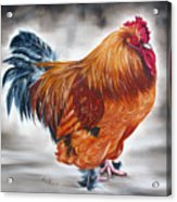 Uncle Samie's Rooster Acrylic Print