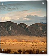 Under  Big Skies Of Montana Acrylic Print by Doug van Kampen, van Kampen Photography