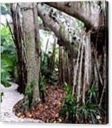 Under The Banyan Tree Acrylic Print