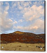 Under The Colorado Sky Acrylic Print