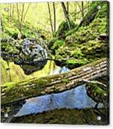 Under The Fallen 2 Acrylic Print