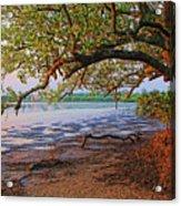 Under The Mangroves Acrylic Print