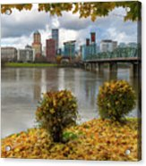 Under The Maple Tree In Portland Oregon During Fall Acrylic Print