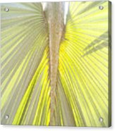Under The Palm I Gp Acrylic Print