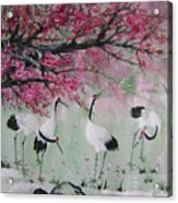Under the snow plums 2 Acrylic Print