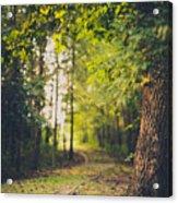 Under The Tree Acrylic Print