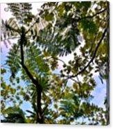 Under The Trees Acrylic Print