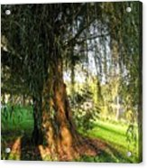Under The Weeping Willow Acrylic Print